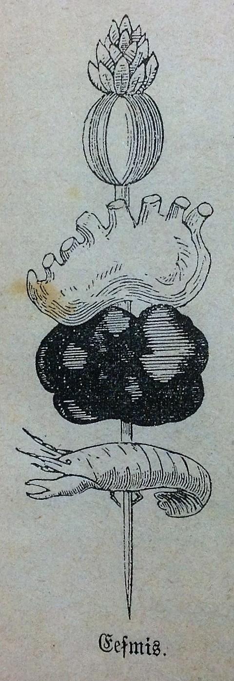 zalite_1902_11
